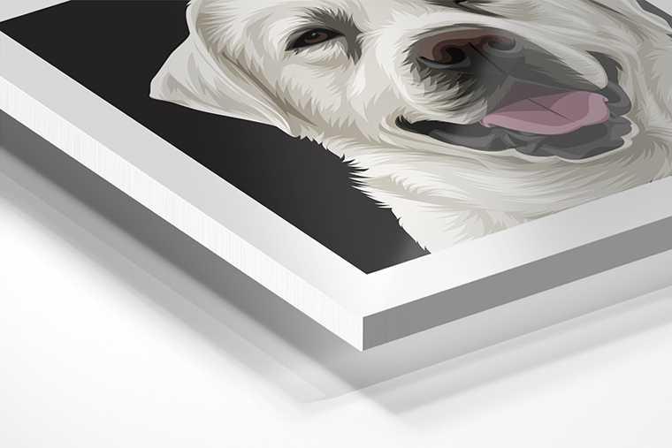 Portret op Forex voor huisdieren